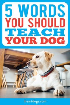 Strengthen your bond with your pup by teaching them these!