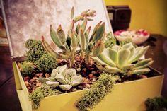 DIY Succulent Book Planter - Darby Smart