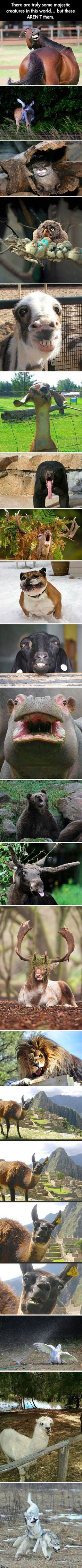 Majestic Animals - Funny Animal Quotes - - This made me laugh so hard! I hope it can cheer anyone up who is having a bad day The post Majestic Animals appeared first on Gag Dad. Funny Animal Memes, Cute Funny Animals, Funny Animal Pictures, Funny Cute, Funny Memes, Funny Pics, Funny Stuff, Stupid Animals, Animal Funnies