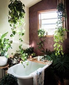If you are fans of a fresh and colorful interior decor, using indoor plants to decorate your interior can be one of easiest ways to make a home feel more lived-in and relaxed. Adding large indoor p… Interior And Exterior, Interior Design, Interior Plants, Contemporary Interior, Home And Deco, Bathroom Inspiration, Bathroom Ideas, Bathroom Goals, Bathroom Colors
