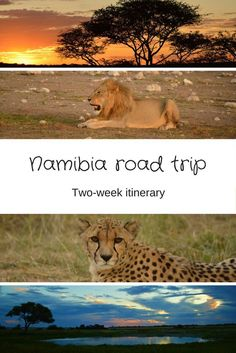 Ever want to go on a road trip in Africa? Namibia is a great place to start! Itinerary ideas here...