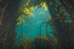 Under the Sea: 12 Best Snorkel Spots in the U.S.