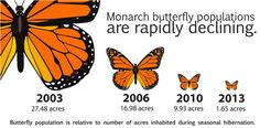 Monarch butterfly population is rapidly declining.