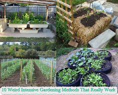 10 Weird Intensive Gardening Methods That Really Wor