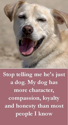 Dog Quotes - Stop telling me he's just a dog. My dog has more character, compassion, loyalty and honesty than most people I know