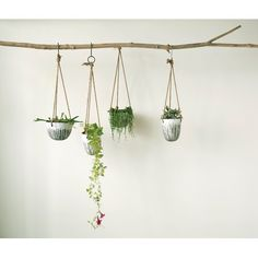Found it at Wayfair - Havana Round Terracotta Hanging Planter