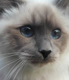Are Cats Nocturnal Refferal: 8079859451 Most Beautiful Animals, Beautiful Cats, Crazy Cat Lady, Crazy Cats, I Love Cats, Cute Cats, Kittens Cutest, Cats And Kittens, Bb Chat