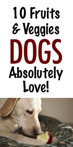 10 Fruits & Veggies Dogs Absolutely Love! http://iheartdogs.com/10-fruits-vegetables-that-are-toxic-to-dogs/