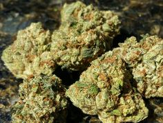 Weed Online Supply is a fast and discreet place to Buy Marijuana/ Buy weed /Buy cannabis at affordable prices within USA and out of USA.Get the best with us as your satisfaction is our priority Visit weedonlinesupplier dot com for more or contact at 978 Growing Marijuana Indoor, Cannabis Growing, Cannabis Plant, Cannabis Oil, Kingston, Cannabis Cures Cancer, Cannabis Seeds For Sale, Medical Marijuana