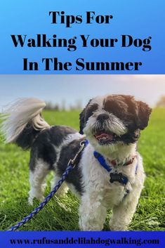 the summer heat can easily take its toll on your dog if you aren't being careful. Read on for some important tips for walking your dog in the summer. Horse Care Tips, Pet Care Tips, Expensive Dogs, Cheap Pets, Pet Odors, Dog Feeding, Find Pets, Pet Health, Happy Dogs