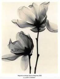 Resultado de imagem para single flower x ray