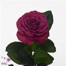 Rose precious moments