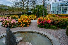 Flower garden - For more photos follow me on instagram: https://www.instagram.com/tivadarbalazs/
