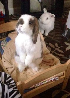 Bunnies - They're Just Like Us