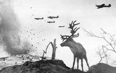 By Yevgeny Khaldei - A shell shocked reindeer looking on as World War II planes drop bombs. This powerful photo shows a scene of man made destruction that is totally at odds with nature which reduces a once majestic and powerful animal to a daze of confusion.