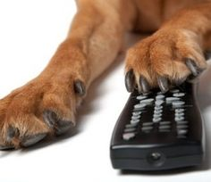 Top Five #Dog Movies Recommended to All