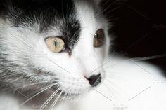 Cat on black background Photos Cat on black background by Shootdiem