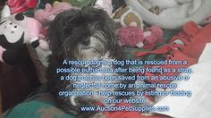 our new blog is out about rescues: