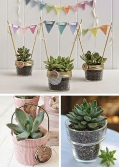 23 Clever DIY Christmas Decoration Ideas By Crafty Panda Cacti And Succulents, Planting Succulents, Shower Party, Baby Shower Parties, Succulent Gifts, Flower Pots, Flowers, Cactus Y Suculentas, Decoration Table