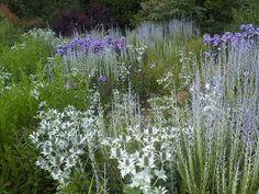 Eringium, Russian sage and Phlox // Wisley (Royal Horticultural Society gardens, UK)