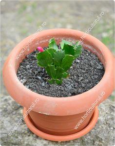 Cactus, Planter Pots, Succulents, Garden, Garten, Lawn And Garden, Succulent Plants, Gardens, Gardening