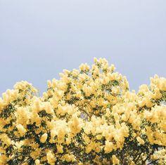 UO Spring: Dreaming of Hawaii via @uohawaii #UrbanOutfitters #UOEurope