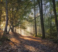 Autumn Morning - Golden hour in Buchan Country Park, Sussex.