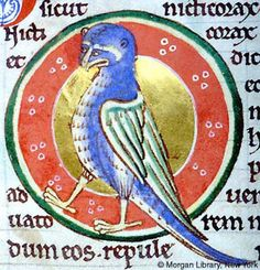 Nycticorax at Night | Bestiary | England, possibly in Lincoln or York | ca. 1185 | The Morgan Library & Museum