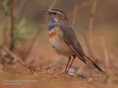 Mangalajodi - a birdwatcher's paradise in Odisha | Photo Gallery - Yahoo! Lifestyle India
