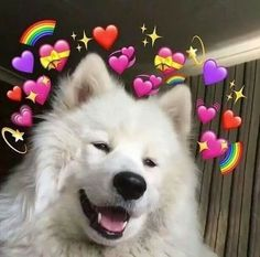 Memes Heart Emoji 34 Ideas For 2019 100 Memes, Best Memes, Funny Memes, Funny Pics, Wallpaper Iphone Cute, Cute Wallpapers, Girl Wallpaper, Disney Wallpaper, Wallpaper Quotes