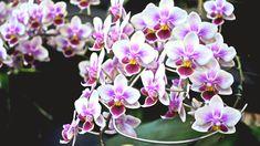 Floral Wreath, Wreaths, Plants, Decor, Google, Decoration, Decorating, Door Wreaths, Flora