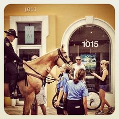 """""""Law enforcement, Las Olas style. Police horse wanted to drop in on the 'First Wave' exhibition """""""