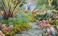 Beautiful succulent garden