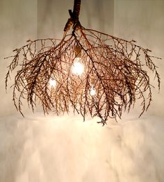 Classic Native Tumbleweed Chandelier | Illuminate your space with a dash of midwest charm. This rusti... | Chandeliers