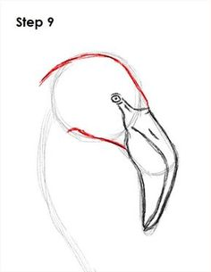 helpful newborn flamingo bird sketch special : Flamingos are generally highly gregarious birds. Flocks numbering within the thousands may well remain visible in prolonged, leaning journey clusters . Flamingo Painting, Flamingo Decor, Pink Flamingos, How To Draw Flamingo, How To Draw Birds, Bird Drawings, Flamingo Drawings, Flamingo Illustration, Bird Design