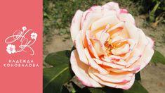 Садовая роза из фоамирана по шаблонам с настоящего цветка с тонировкой л...