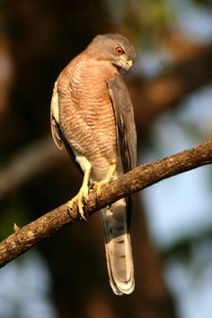 Watch Wildlife (India). 'Whether you prefer to do it by boat or creeping through the forest canopy, avid naturalists will relish the chance to seek out Goa's wildlife of the skies, the seas or rustling somewhere in the bushes. Mingle with monkeys at Cotigao Wildlife Sanctuary, spot a Ceylon frogmouth at the beautiful Dr Salim Ali Bird Sanctuary.' http://www.lonelyplanet.com/india/goa/south-goa/sights/other/cotigao-wildlife-sanctuary