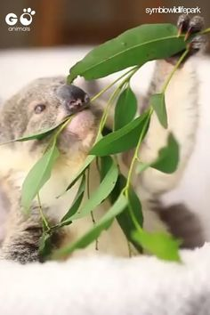 Mar 2020 - This is the purest thing 😍 Cute Wild Animals, Baby Animals Pictures, Super Cute Animals, Cute Little Animals, Funny Animal Pictures, Cute Funny Animals, Animals Beautiful, Animals And Pets, Cute Animal Videos