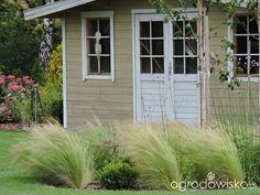 Zielonej ogrodniczki marzenie o zielonym ogrodzie - strona 1078 - Forum ogrodnicze - Ogrodowisko