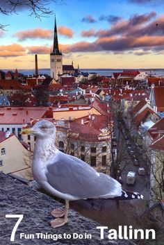 Tallinn Estonia is a hidden gem of a city in Europe. See why we fell in love with the city during our Tallinn holiday and check out seven fun things to do in Tallinn. via @2foodtrippers