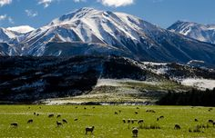 New Zealand Tourist Attractions – Top 10 Exciting Destinations, Tourist places to visit in New Zealand. Read more at: http://10travelspots.com/zealand-tourist-attractions-top-10-exciting-destinations-tourist-places-to-visit-in-new-zealand/