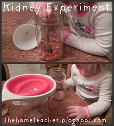 Human Body: The Urinary System | The Home Teacher - filter urine from blood play experiment
