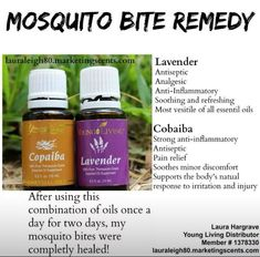 Put lavender oil on mosquito bites to reduce itch and help heal Essential Oils For Mosquitoes, Doterra Essential Oils, Natural Essential Oils, Essential Oil Blends, Essential Oils Bug Repellant, Mosquito Bite Essential Oil, Essential Oil Bug Spray, Young Living Oils, Young Living Essential Oils