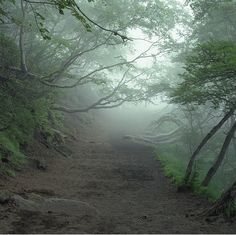 Aokigahara Forest in Japan.  No wind, no wildlife, deathly quiet.  Known as suicide forest.  A negative energy, yet so beautiful.