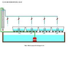 aquaponic diagrams | compact aquaponics diagram - HomeBrewTalk Gallery