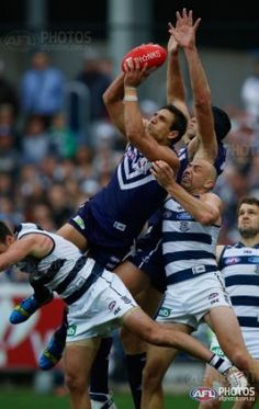 Matthew Pavlich of the Dockers in action during the 2013 AFL Qualifying Final match between the Geelong Cats and the Fremantle Dockers at Simonds Stadium, Geelong on September (Photo: Sean Garnsworthy/AFL Media) Australian Football League, Best Player, Finals, Toyota, September, Action, In This Moment, Running, Cats