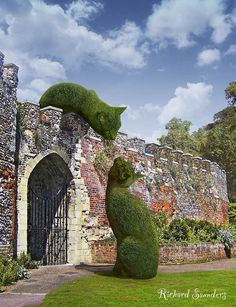 The Topiary Cat was becoming lonely and decided to take a walk. Peering over the old wall surrounding his home he discovered a friend. by Rich Saunderswww.facebook.com/topiarycat