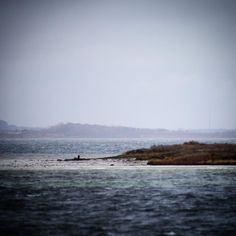 Blæsende dag på Helnæs #visitfyn #fyn #nature #visitdenmark #naturelovers #natur #denmark #danmark #dänemark #landscape #assens #mitassens #vildmedfyn #fynerfin #assensnatur #vielskernaturen #visitassens #instapic #picoftheday #sea #december #winter #waves