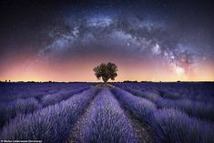 Harmony by Stefan Liebermann is a panorama of the Milky Way over the lavender fields in Valensole, France Astronomy Photography, World Photography, Photography Awards, Andrew Mccarthy, Stonehenge, New Zealand Image, Northern Lights Iceland, Valensole, China Image