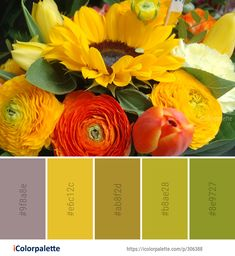 Color Palette Ideas from Flower Yellow Floristry Image Color Schemes Colour Palettes, Color Combinations, Colorful Flowers, Beautiful Flowers, Colours That Go Together, Bedroom 2018, Fixer Upper House, Bouquet Images, Find Color